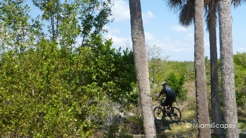Mountain Biking at Oleta