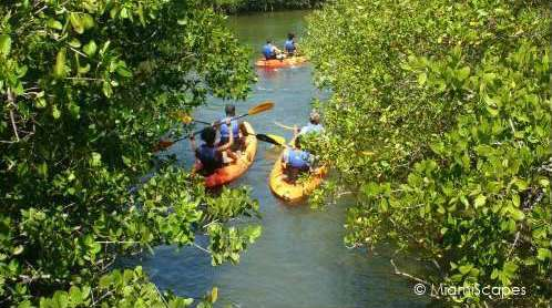 Mangrove creeks and waterways at Oleta great for kayaking and canoeing