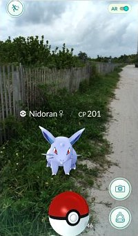 Catching  Nidoran on the trails at Lummus Park in Miami