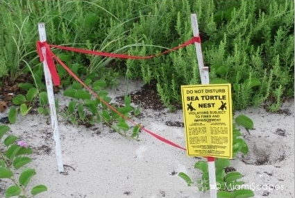 During the summer months if you visit any of our beaches you are likely to see turtle nests that have been marked by conservation groups and volunteers. Please be mindful by staying away.
