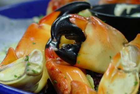 Miami in October: Stone Crab Season