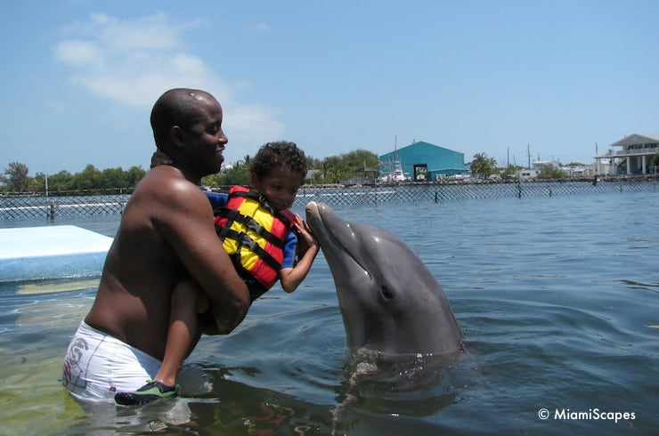 Swiming with Dolphins at the Dolphin Research Centre, adults with toddlers