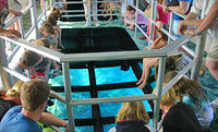 Glass Bottom Tour in Miami