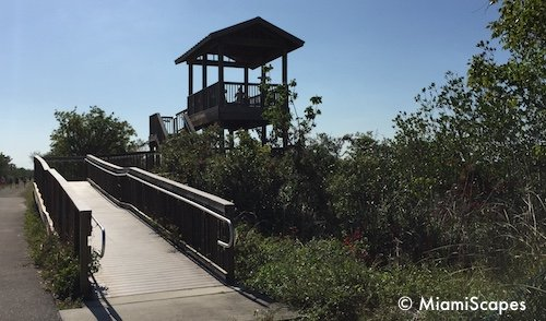 Marsh Trail Observation Tower