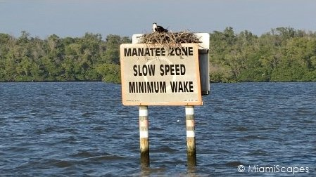 Manatee Zone at 10000 Islands