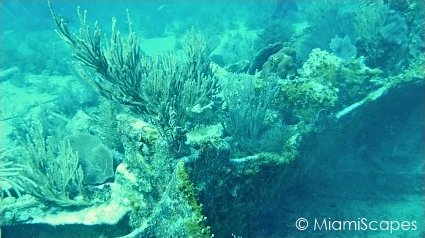 Key Largo Scuba Diving - Benwood Wreck: seafans and coral growth