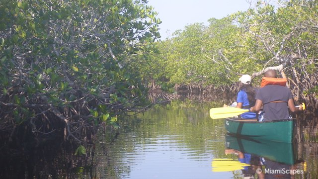 Canoeing in Biscayne National Park - Mangroves