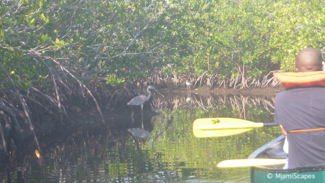 Canoeing in Biscayne National Park - Birds