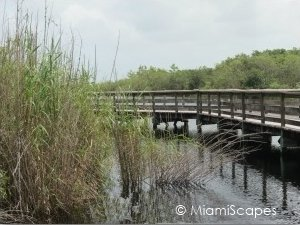 Everglades Boardwalks at Royal Palm