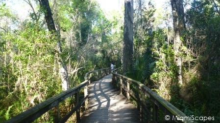 Fakahatche Strand Big Cypress Bend Boardwalk