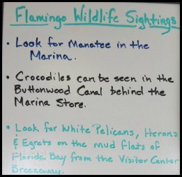 Wildlife Sightings Board at Flamingo