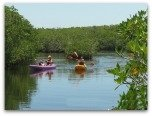 Everglades Kayaking Canoeing