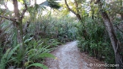 Trails at the Florida Panther National Wildlife Refuge