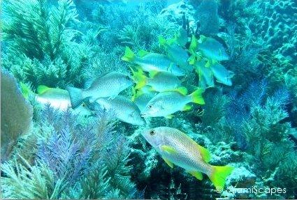 Beautiful reef off Key Largo