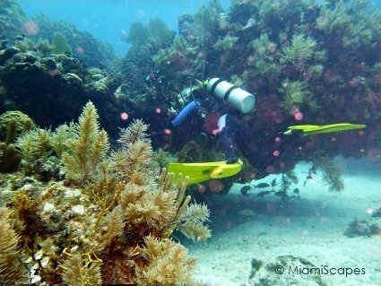 French Reef - Christmas Tree Caves