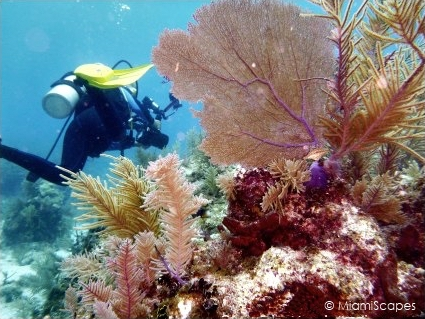 Diving French Reef: Soft Corals and Seafans