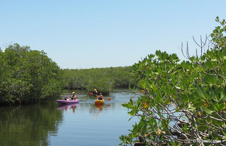 Kayaking the Mangrove Creeks at John Pennekamp