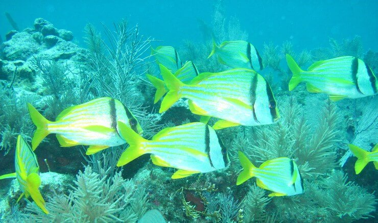 Miami in July - Scuba Diving