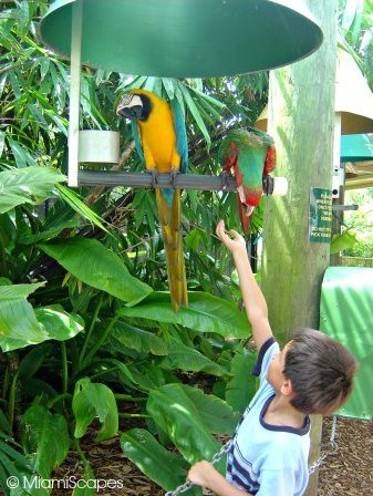 Feeding the parrots at Jungle Island