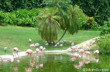 Jungle Island Flamingo Pond