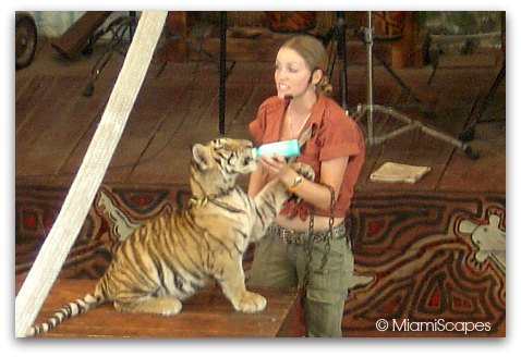 Jungle Island Tiger Cub Show