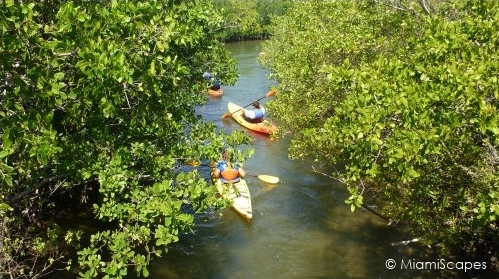 Kayaking at Oleta along mangrove coastline