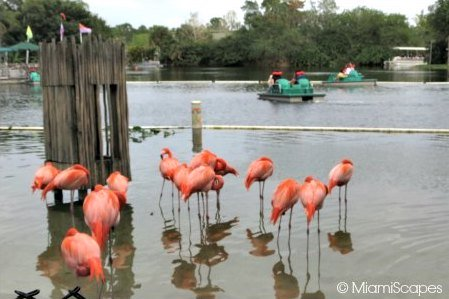 Lion Country Safari World - Flamingoes and Paddle Boats