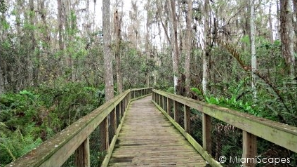 Loxahatchee National Wildlife Refuge Cypress Swamp Boardwalk