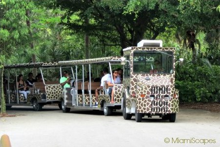 Tram Tours at Zoo Miami