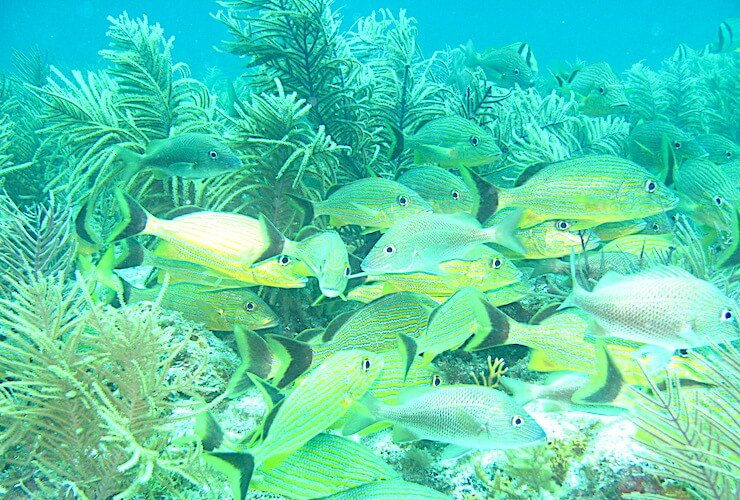 Tropical Fish scuba diving Biscayne Bay Park