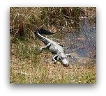 Miami Attractions: Everglades National Park