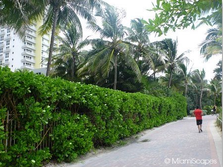 Miami Beach Walk Paver Walkway between 14th and 24th Streets Condos and Hotels