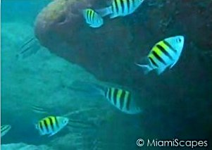 Snorkeling near the pier at Bill Baggs State Park