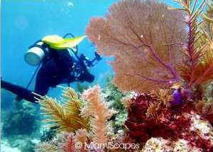 Scuba Diving in Molasses Reef