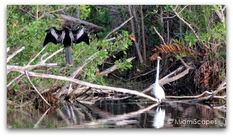 Birds at Mrazek Pond: anhinga, egret