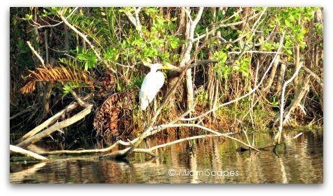 Egret at Mrazek Pond