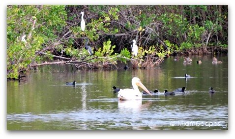 Birds at Mrazek Pond: pelican, egret, heron, ducks