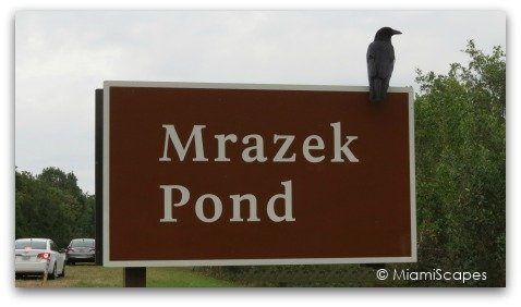 Mrazek Pond Sign