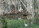 Big Cypress Swamp