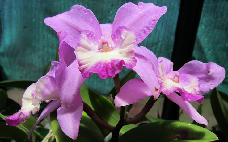 Orchid Show in May