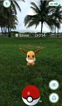 Eevee, a normal type Pokemon spawns everywhere