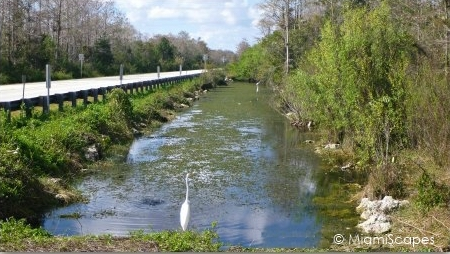 Canal alongside Tamiami Trail