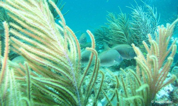 Snorkeling in Biscayne National Park