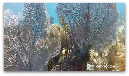 Beautiful Coral Reefs and Sea Fans at Biscayne National Park