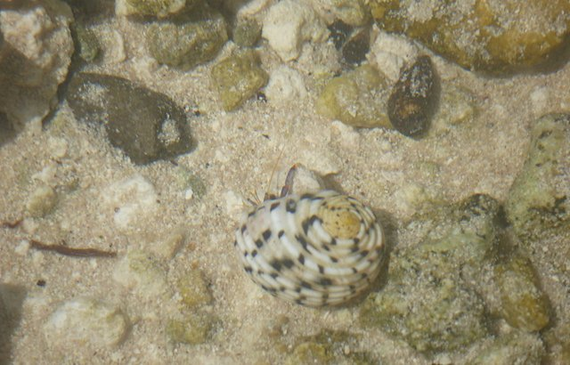 Snorkeling from the Beach, small critters