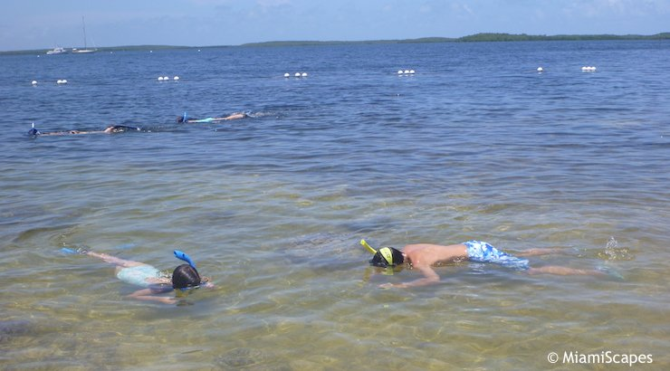 Kids Snorkeling from the Beach at Pennekamp Park