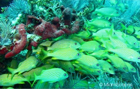 Colorful corals and fish at John Pennekamp Park