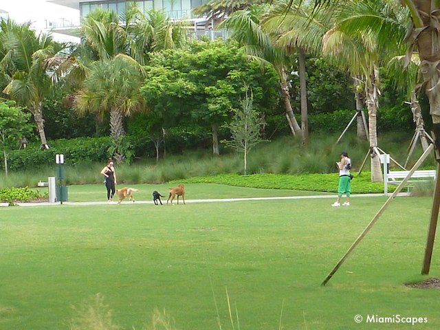 South Pointe Park Off-Leash Dog Park Area