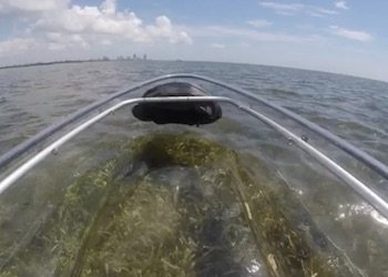 Clear Bottom Kayak at Crandon Park