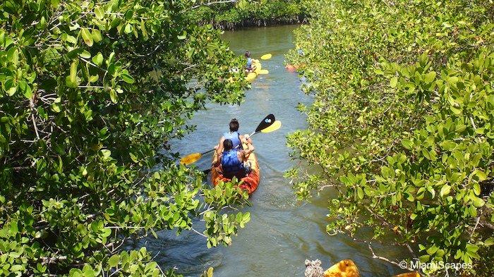Kayaking the mangrove creeks at Oleta River